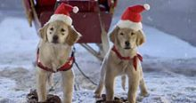 INDUCTION: Santa Buddies: You Wouldn't Think Puppies Could Suck the Joy Out of Christmas